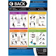 Anatomical Chart - Back